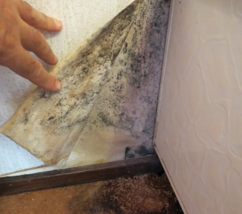 mould-behind-wallpaper.png